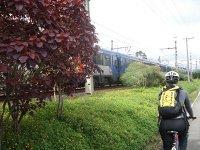 Ciclovia Marginal Pinheiros - Canteiro e trem
