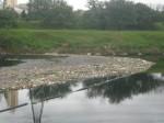 Lixo no Rio Pinheiros