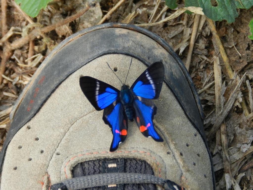 A natureza vem dar boas vindas ao cicloturista, através de uma borboleta lindíssima