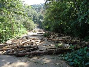 Árvores também bloqueiam a pista. Foto: Anselmo Stoquini