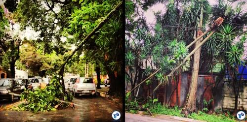 Procedimento padrão em São Paulo: a árvore que cai na via (esq.) é empurrada para a calçada ou ciclovia para liberar espaço para os carros, ainda que os pedestres e ciclistas tenham que descer à via e se colocar em risco. Foto: Dani Carbognin