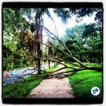 Árvore obstruiu totalmente a ciclovia por quatro dias, até ser cortada e deixada (até agora) sobre a área gramada. Foto: Rachel Schein