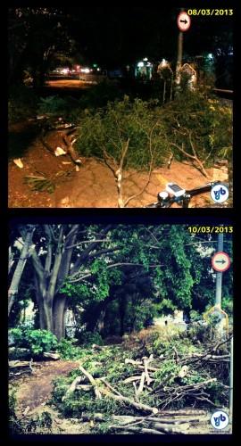 Galhos de árvores que caíram na noite de 8 de março (sexta), na Av. Faria Lima, em São Paulo, foram colocados sobre a ciclovia. No final de semana, ciclistas abriram espaço sobre o canteiro para circular. Fotos: Willian Cruz e Rachel Schein