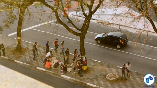 As árvores ficam no canteiro central da avenida, que seria reduzido para criar uma nova faixa para os carros. Foto: Rachel Schein