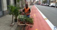 vendendo arvores com a bicicleta fb h