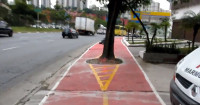 Árvore na calçada da Av. Politécnica já teve a área em volta de sua raiz reaberta. Imagem: Tacio Phillip