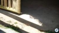 Tem um lagarto no meio da foto, mas tem que ver em tela cheia. Foto: Willian Cruz