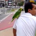 ciclista papagaio destaque - Imagem Fernando Rivera