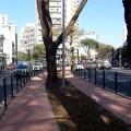 Árvores do canteiro central foram preservadas. Foto: Willian Cruz