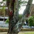 Prefeitura já marcou árvores que serão cortadas. Foto: Cezar Martins