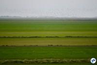 Holanda To Harlingen 1 - Foto Raquel Jorge