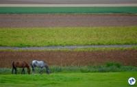 Holanda To Harlingen 6 - Foto Raquel Jorge
