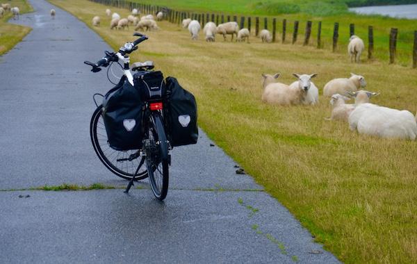 Ovelhas, companheiras frequentes de estrada da colunista do Vá de Bike. Foto: Raquel Jorge