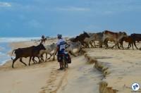 Cicloturismo de Alagoas ate a Bahia 036 - Foto Raquel Jorge